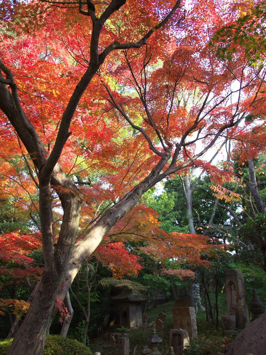 紅葉 2013 <太閤園>             _f0021869_21111871.jpg