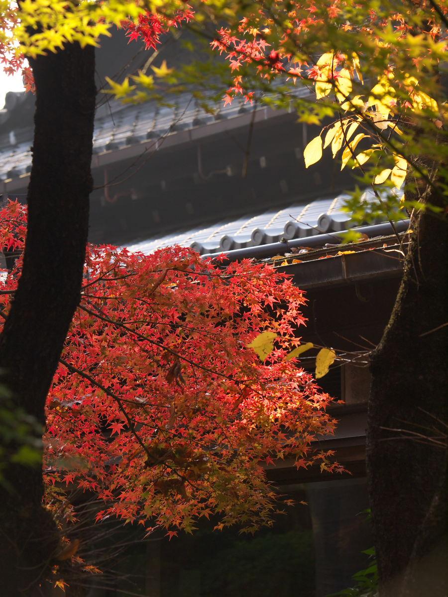 紅葉 2013 <太閤園>             _f0021869_2191271.jpg