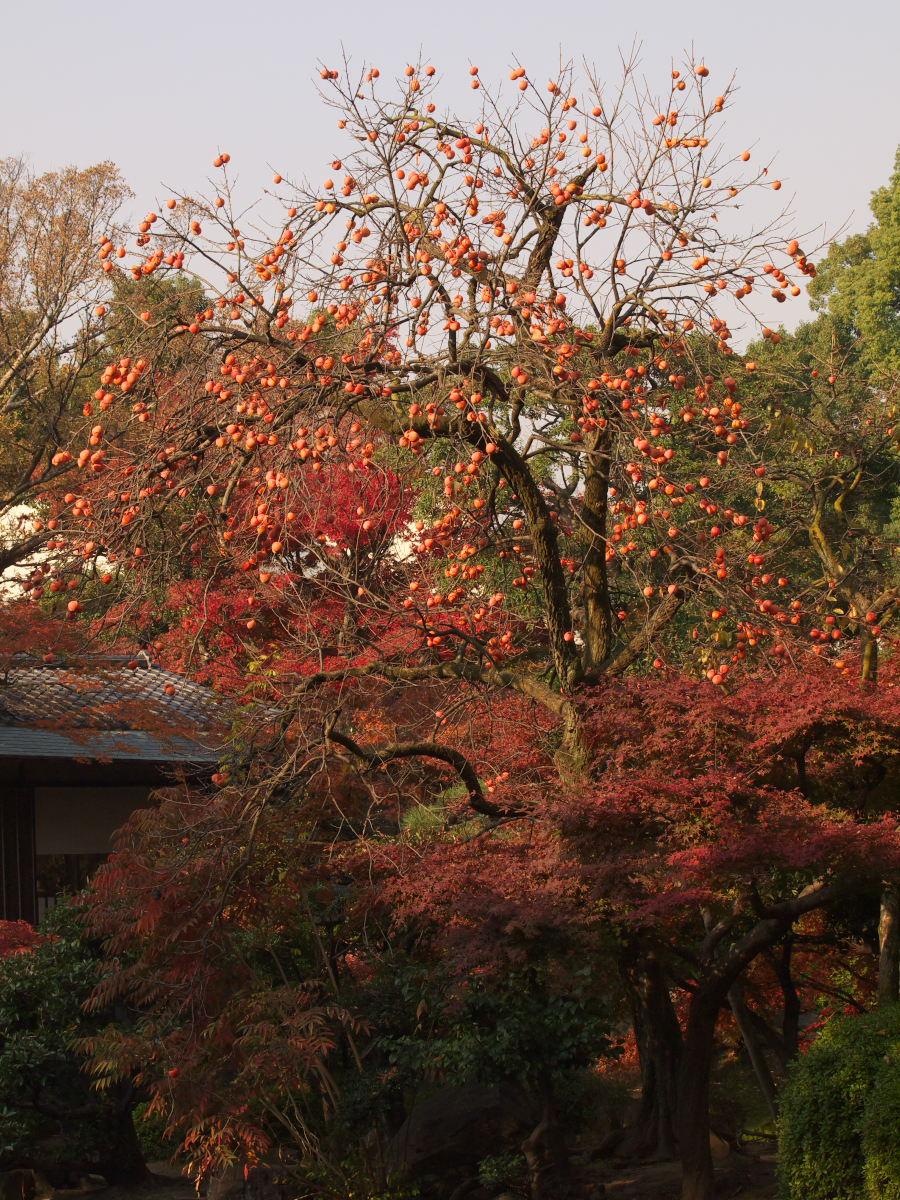紅葉 2013 <太閤園>             _f0021869_2194352.jpg