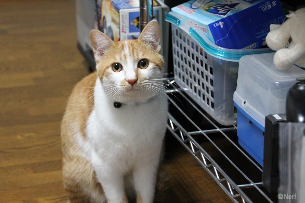 【猫】二匹の距離_f0141609_20485377.jpg