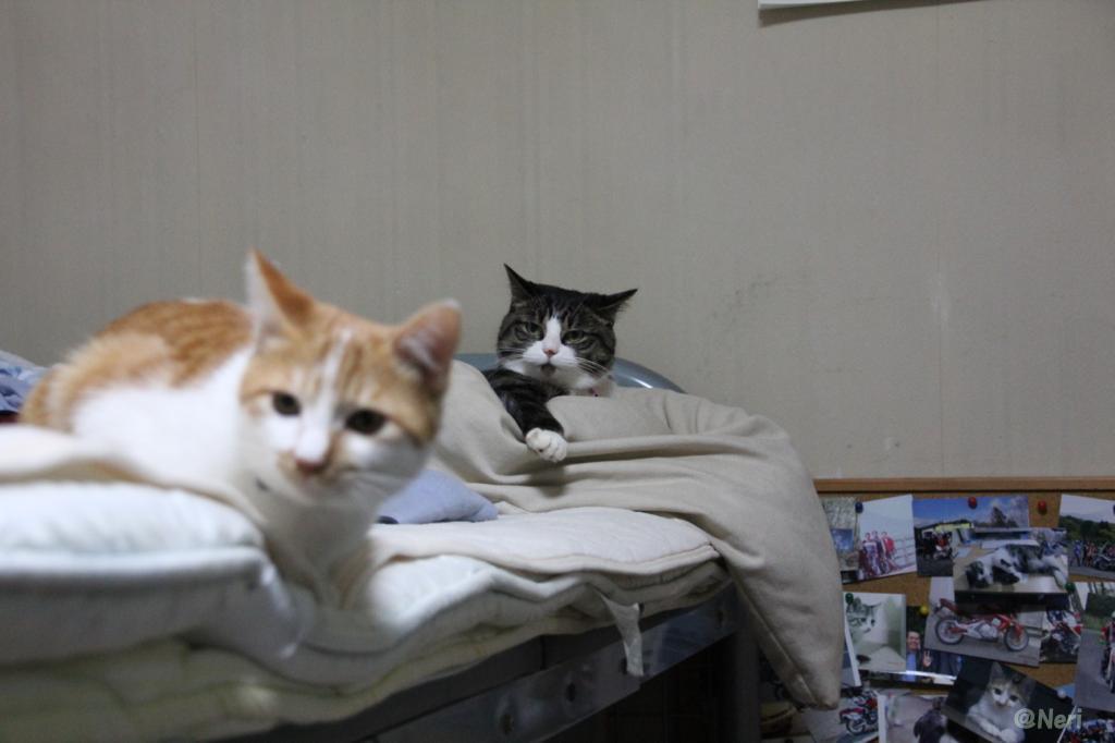 【猫】二匹の距離_f0141609_20491147.jpg