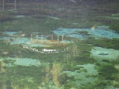 鹿児島県 湧水町の丸池公園♪_b0228113_14243187.jpg