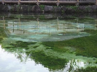 鹿児島県 湧水町の丸池公園♪_b0228113_14263075.jpg
