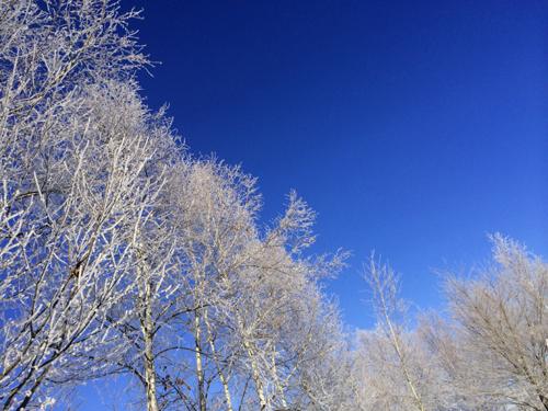 綺麗過ぎる真冬の一日。_f0096216_1621890.jpg