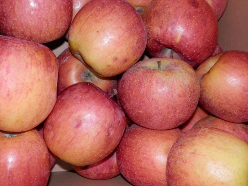 新発売「焼き林檎とクリームチーズ」のデザートピザ_a0125419_21083922.jpg