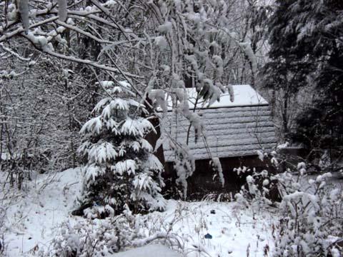 雪が降る♪_d0127634_14182411.jpg