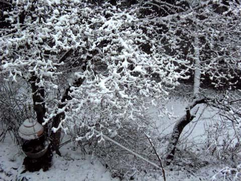 雪が降る♪_d0127634_1419261.jpg