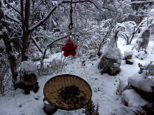 雪が降る♪_d0127634_14335172.jpg