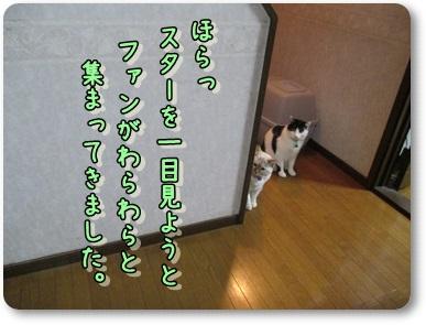b0151748_11504622.jpg