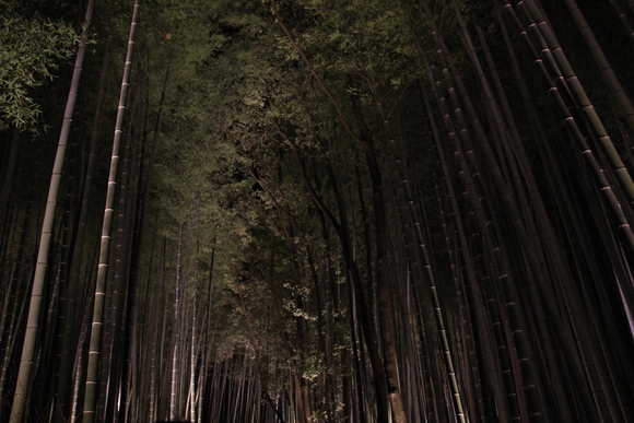 嵐山 ライトアップ!_d0202264_1553264.jpg