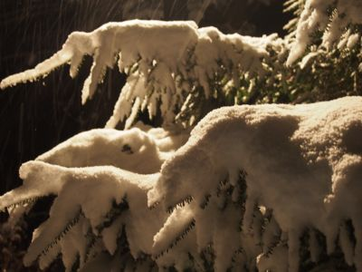 今シーズン初の、本格的な積雪となりました_d0133485_1013154.jpg