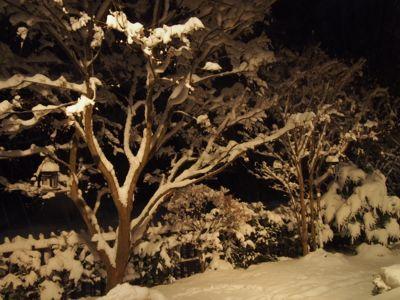 今シーズン初の、本格的な積雪となりました_d0133485_10131745.jpg