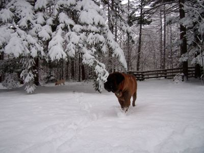 今シーズン初の、本格的な積雪となりました_d0133485_10133019.jpg