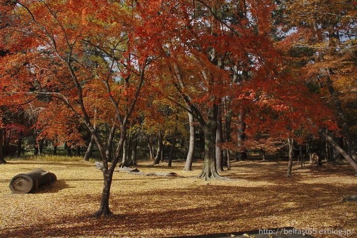 京都御苑・森の文庫_f0095094_23204371.jpg