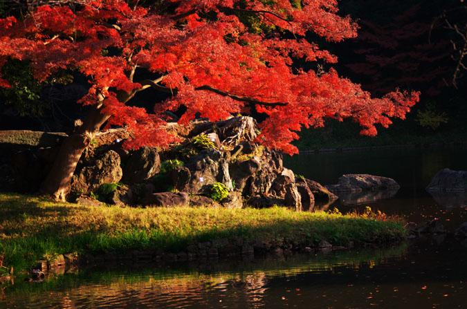 小石川後楽園の紅葉2_a0263109_13101246.jpg