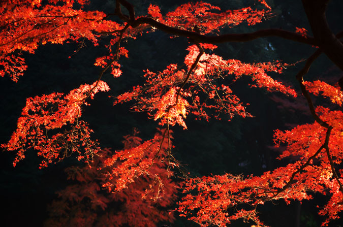 小石川後楽園の紅葉2_a0263109_1311213.jpg