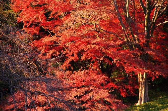 小石川後楽園の紅葉2_a0263109_13134699.jpg