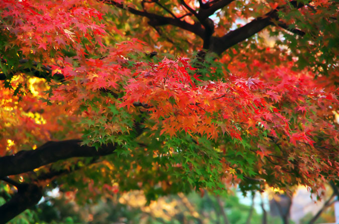 小石川後楽園の紅葉2_a0263109_13142814.jpg