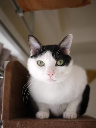 猫のお友だち 八朔くん柚子ちゃん編。_a0143140_2337839.jpg