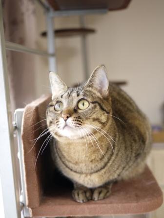 猫のお友だち 八朔くん柚子ちゃん編。_a0143140_23381055.jpg
