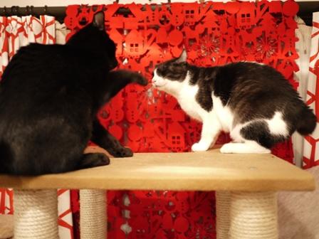 なかよくけんかしな猫 てぃぁらみるきぃ編。_a0143140_23585896.jpg