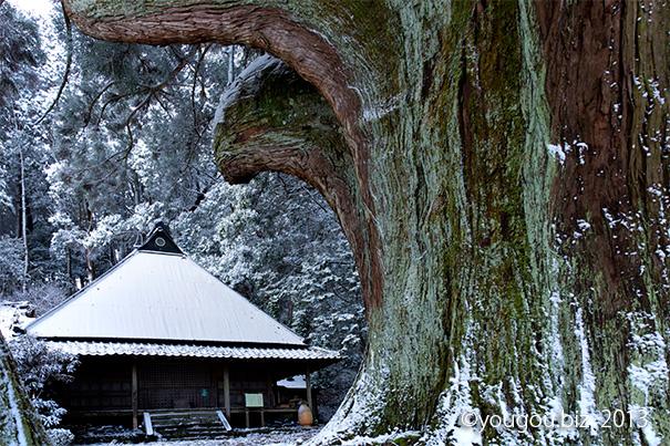 雪と巨木の堂宇 Snow and giant tree. At the mountain of the east in Nara_e0245846_2051026.jpg