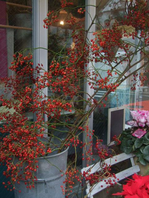 オークリーフ(もうすぐクリスマスですね)_f0049672_1248153.jpg