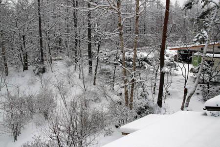 雪のお便り_f0145483_13105038.jpg