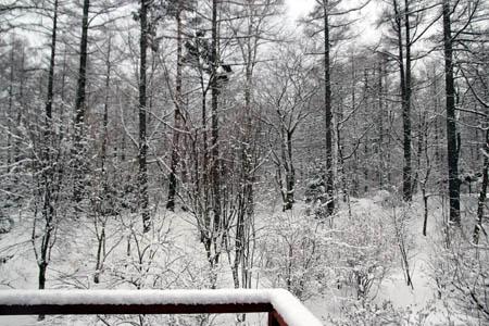 雪のお便り_f0145483_1322412.jpg