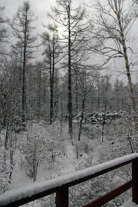 雪のお便り_f0145483_13243282.jpg