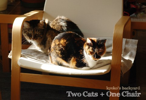 Two Cats + One Chair_b0253205_154017.jpg