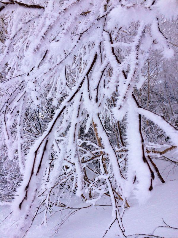 札幌国際スキー場 ☆北海道_c0151965_1517646.jpg