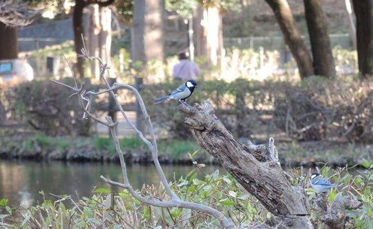今年は鳥が少ない_e0232277_11254950.jpg