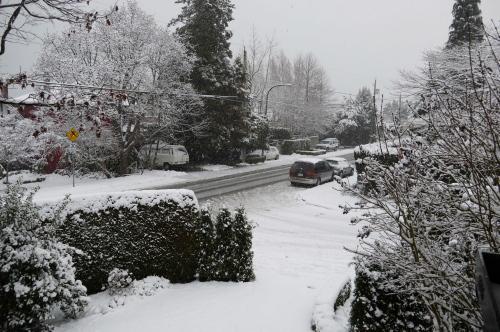 雪が積もりました_d0129786_15112211.jpg