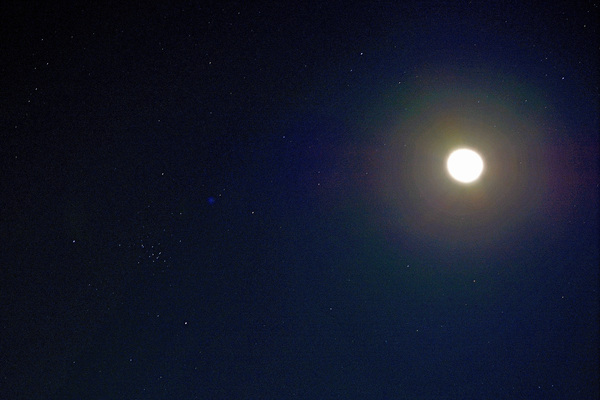 カワセミ久しぶり/ジョウビタキ/大山初冠雪/彗星4つ_b0024798_14595434.jpg
