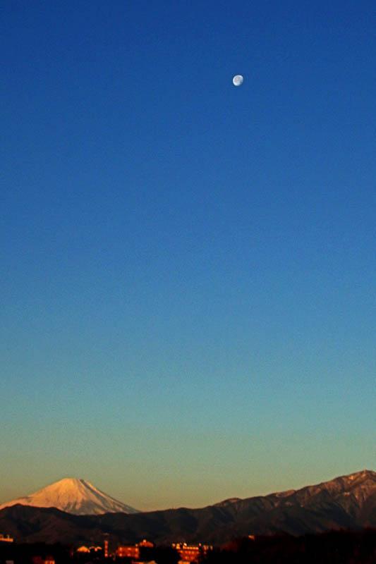 カワセミ久しぶり/ジョウビタキ/大山初冠雪/彗星4つ_b0024798_1552288.jpg