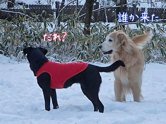 雪があって良かったね_f0064906_16102559.jpg