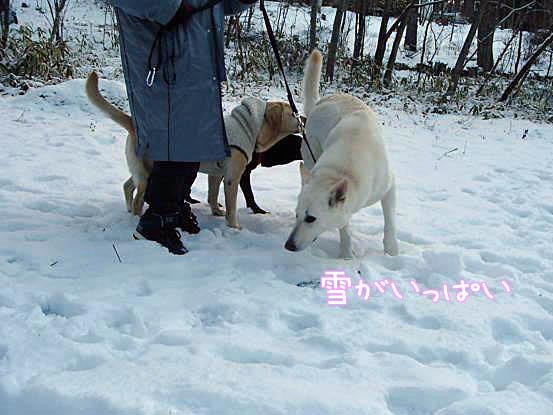 雪があって良かったね_f0064906_16152244.jpg