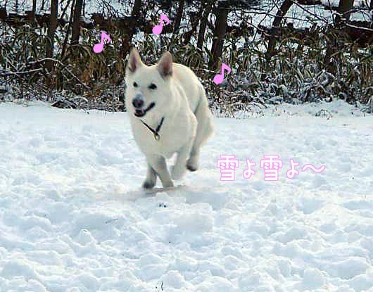 雪があって良かったね_f0064906_16175339.jpg