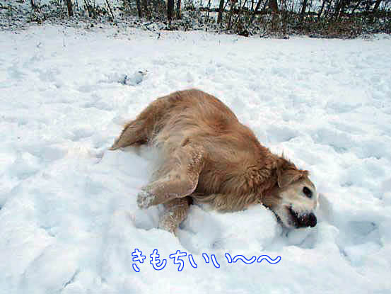 雪があって良かったね_f0064906_1683631.jpg