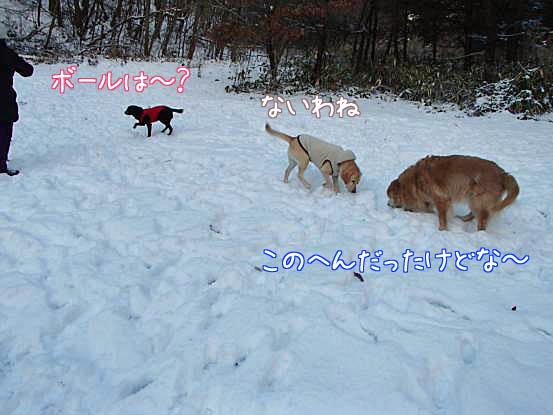 雪があって良かったね_f0064906_169204.jpg