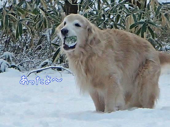 雪があって良かったね_f0064906_1695046.jpg