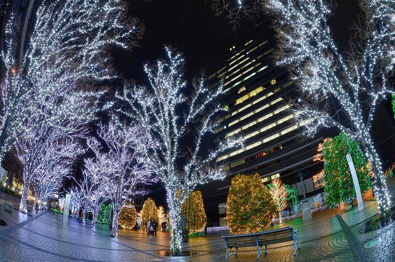 クリスマスイルミネーション@京セラ本社 其の一_f0032011_1531375.jpg