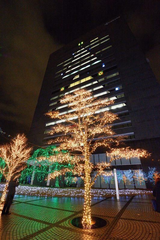 クリスマスイルミネーション@京セラ本社 其の一_f0032011_1532167.jpg