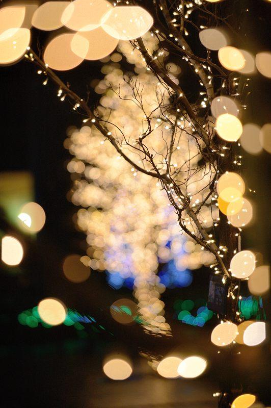 クリスマスイルミネーション@京セラ本社 其の一_f0032011_15334613.jpg
