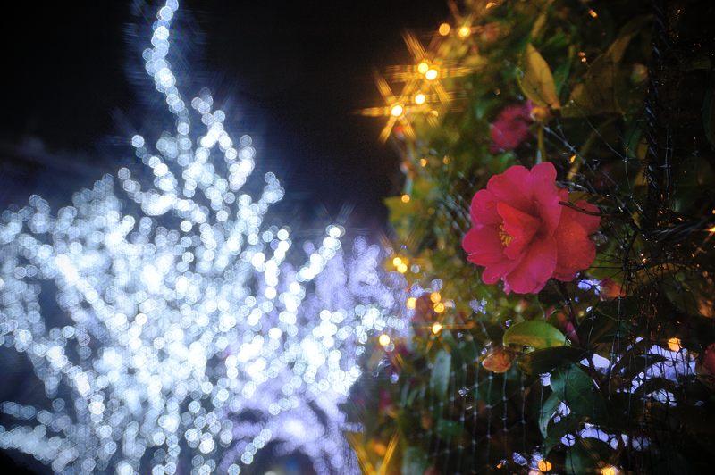 クリスマスイルミネーション@京セラ本社 其の一_f0032011_1534270.jpg