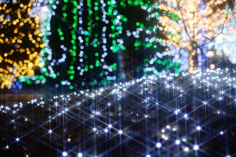 クリスマスイルミネーション@京セラ本社 其の一_f0032011_15385648.jpg