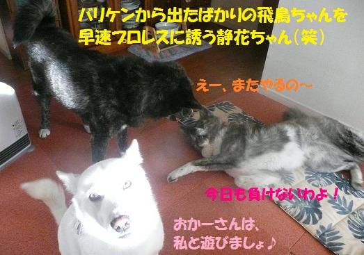 f0121712_6333896.jpg