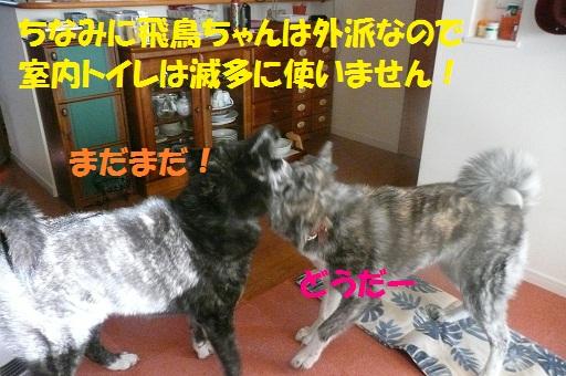 f0121712_637076.jpg