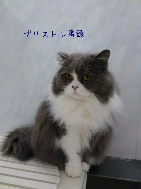 猫 番頭_e0237625_0594356.jpg